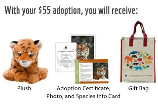adoption-index-header