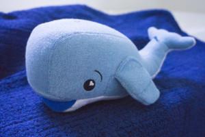 SoapSox Blue Jackson Whale
