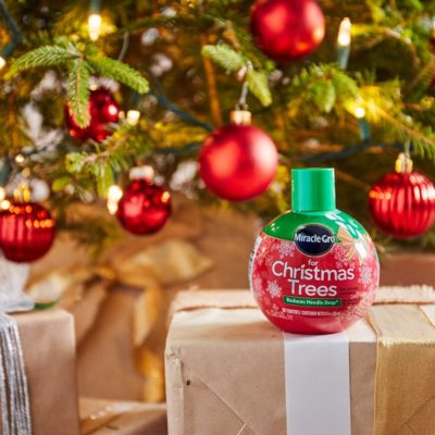 Miracle-Gro For Christmas – Gifts for Kids & Keep Your Christmas Tree Fresh